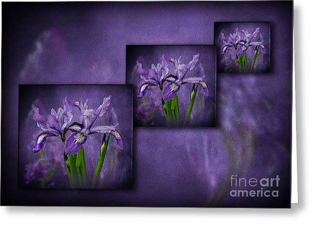 Iris Art Greeting Card