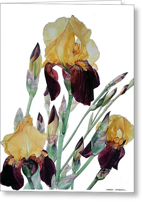 Watercolor Of Tall Bearded Iris In Yellow And Maroon I Call Iris Beethoven Greeting Card
