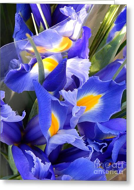 Iris Blues In New Orleans Louisiana Greeting Card