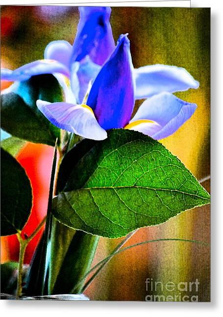 Iris Carried Away Greeting Card by Gwyn Newcombe