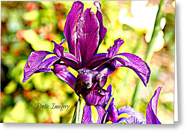 Iris Greeting Card by Debbie Sikes