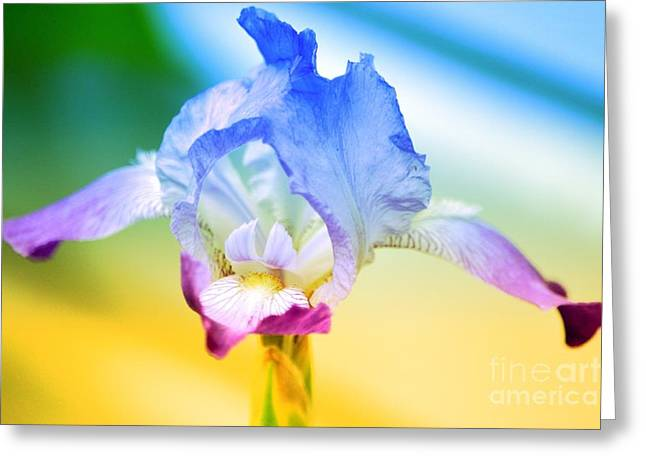 Greeting Card featuring the photograph Iris by Denise Tomasura