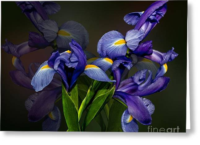 Greeting Card featuring the photograph Iris Fantasy by Shirley Mangini