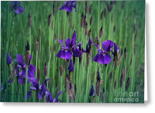 Iris Field Greeting Card by Yumi Johnson