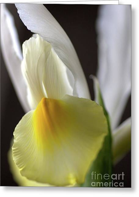 Greeting Card featuring the photograph Iris Flower by Joy Watson