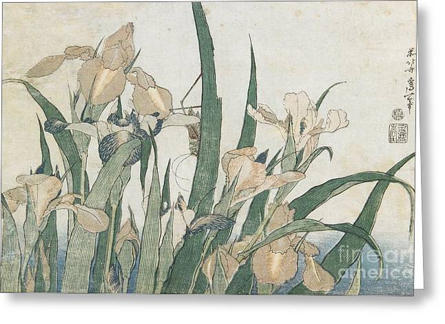 Iris Flowers And Grasshopper Greeting Card by Hokusai