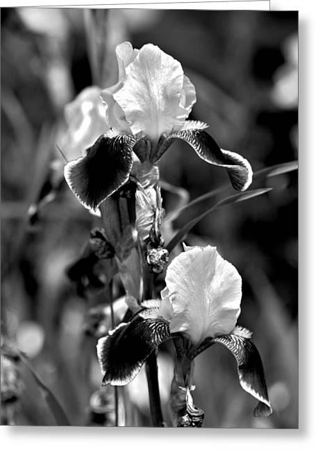 Iris In Black And White Greeting Card by Karon Melillo DeVega