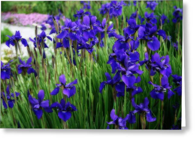 Greeting Card featuring the photograph Iris In The Field by Kay Novy