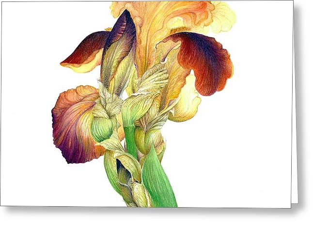 Iris Indian Chief / Sold Greeting Card