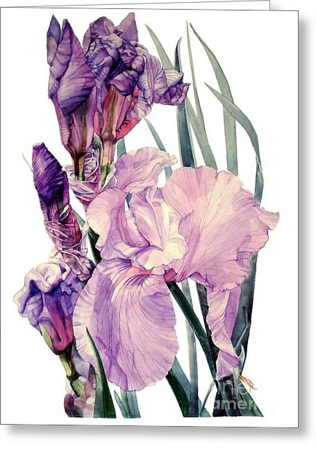 Watercolor Of An Elegant Tall Bearded Iris In Pink And Purple I Call Iris Joan Sutherland Greeting Card