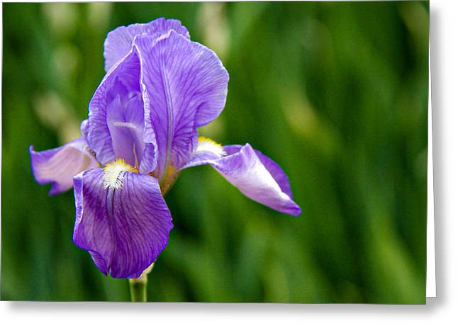 Greeting Card featuring the photograph Iris by Lana Trussell