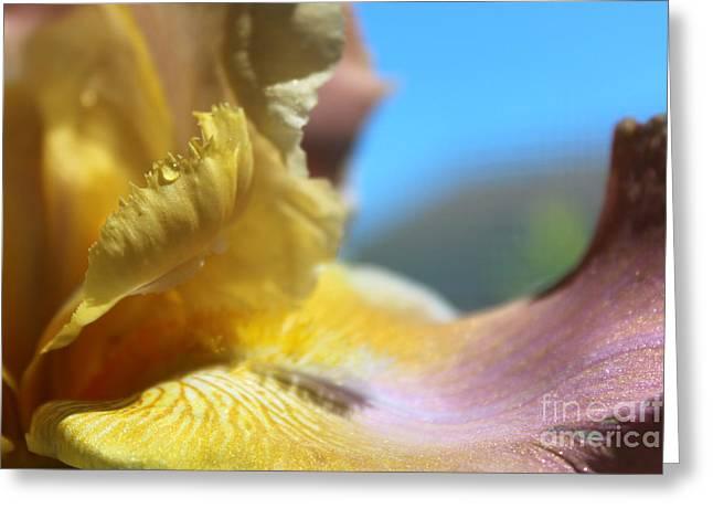 Iris Landscape Greeting Card