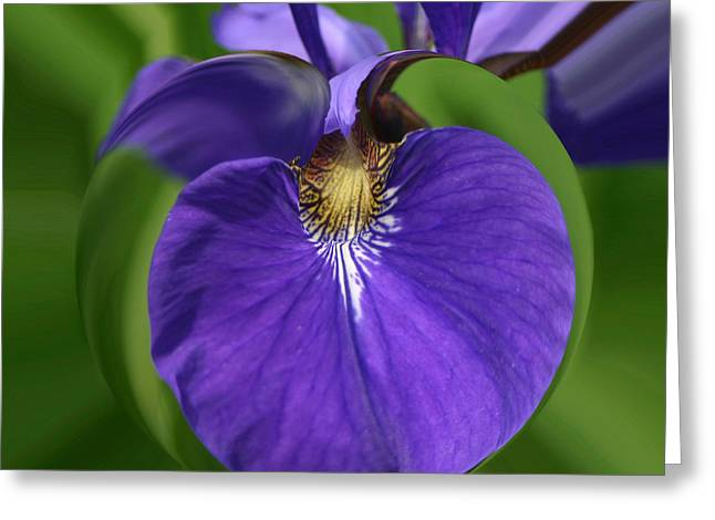 Iris Leaf Greeting Card