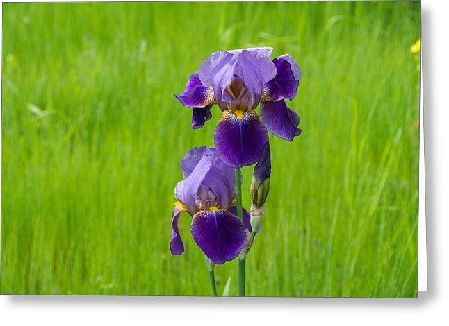 Iris Greeting Card by Michele Wright