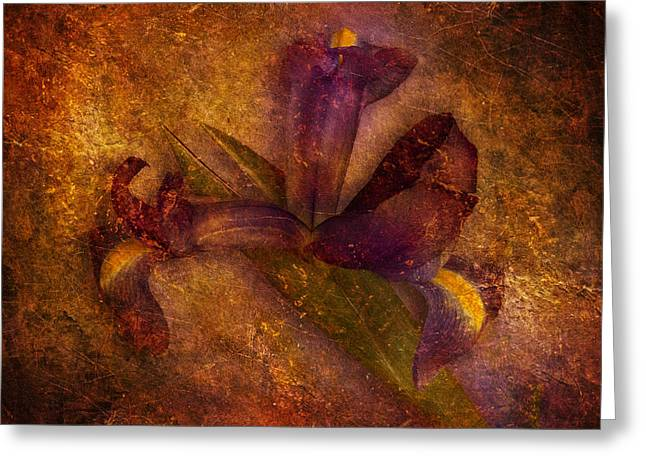 Greeting Card featuring the photograph Iris Number Eight by Bob Coates