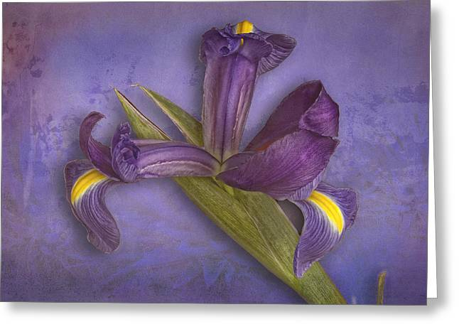 Greeting Card featuring the photograph Iris Number Five by Bob Coates