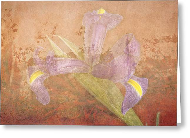 Greeting Card featuring the photograph Iris Number Four by Bob Coates