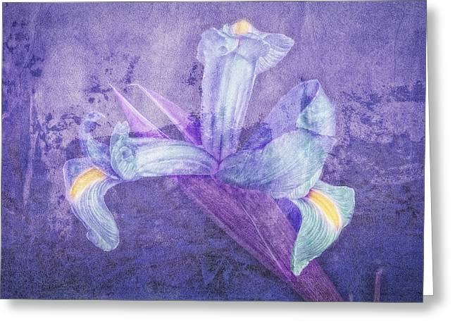 Greeting Card featuring the photograph Iris Number Seven by Bob Coates