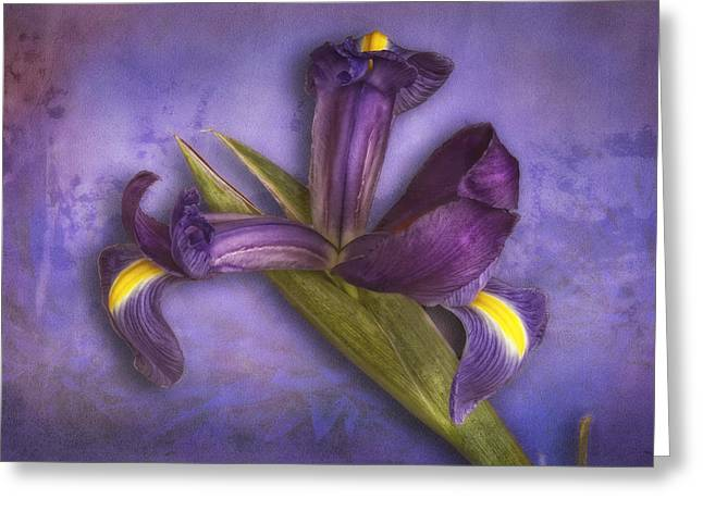 Greeting Card featuring the photograph Iris Number Six by Bob Coates