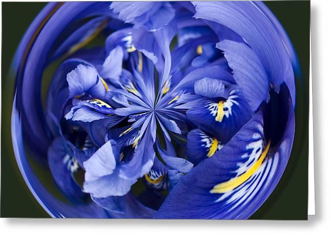 Iris Orb Greeting Card by Anne Gilbert