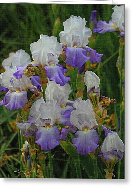 Iris Patch At The Arboretum Greeting Card