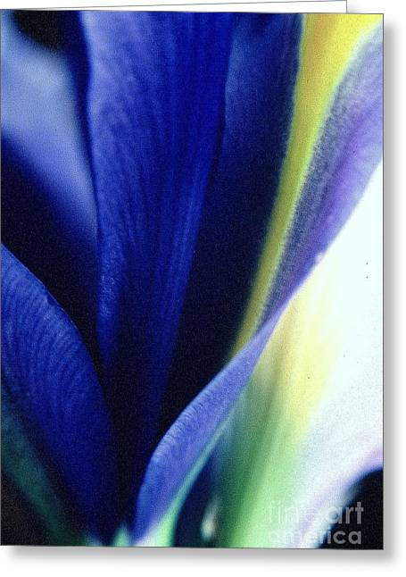 Greeting Card featuring the photograph Iris by Ranjini Kandasamy