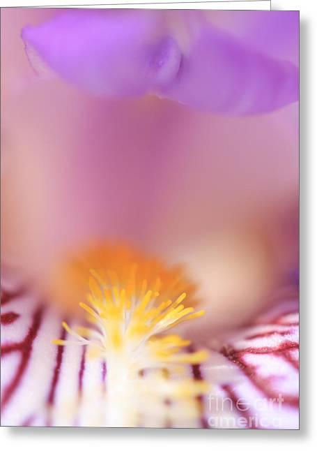 Iris Greeting Card by Rebeka Dove