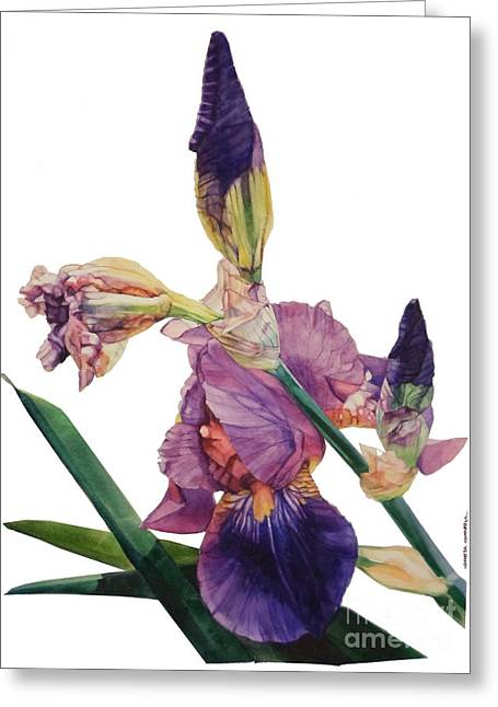 Watercolor Of A Tall Bearded Iris In A Color Rhapsody Greeting Card