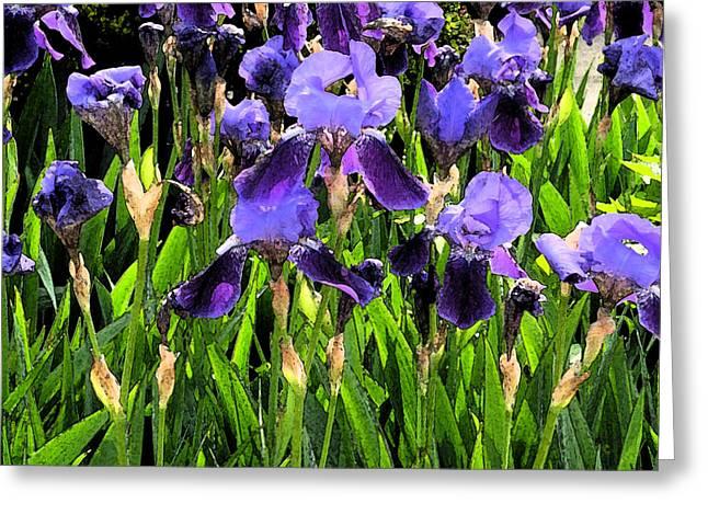 Iris Tectorum Greeting Card by Yue Wang