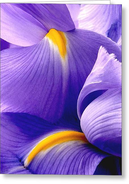 Iris Vi Greeting Card