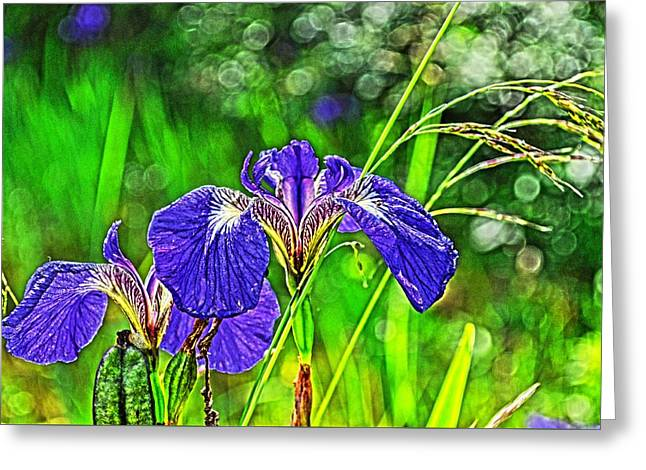 Greeting Card featuring the photograph Irises by Cathy Mahnke