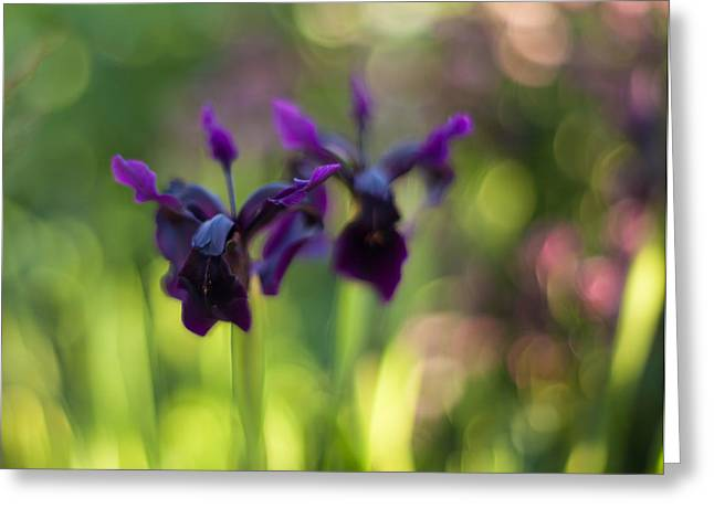 Irises Depth Greeting Card by Mike Reid