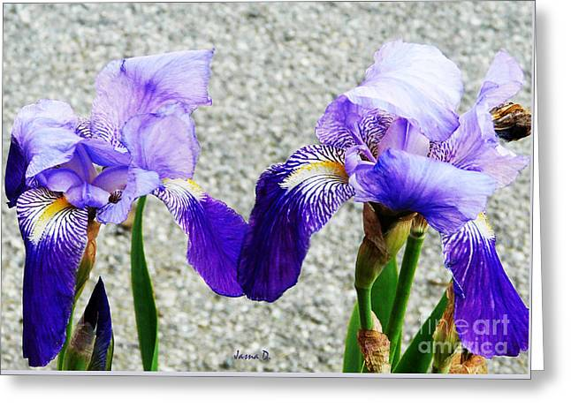 Greeting Card featuring the photograph Irises by Jasna Dragun