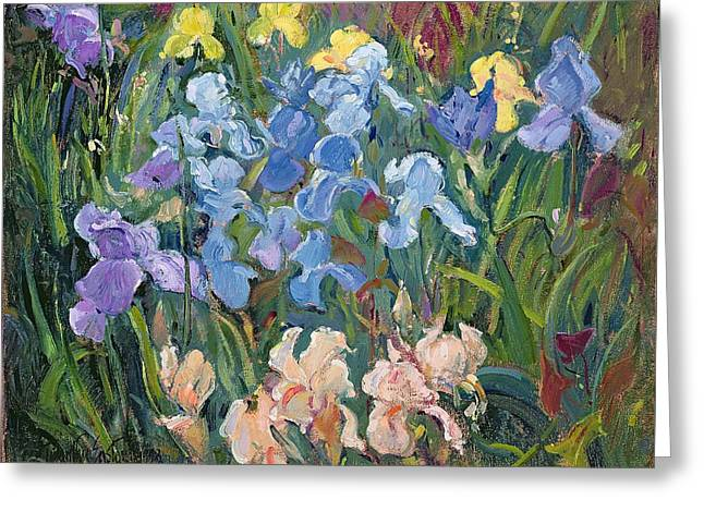 Irises Pink, Blue And Gold Greeting Card by Timothy Easton