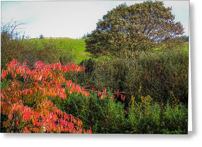 Irish Autumn Countryside Greeting Card