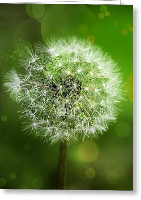 Irish Dandelion Greeting Card by Bill Tiepelman