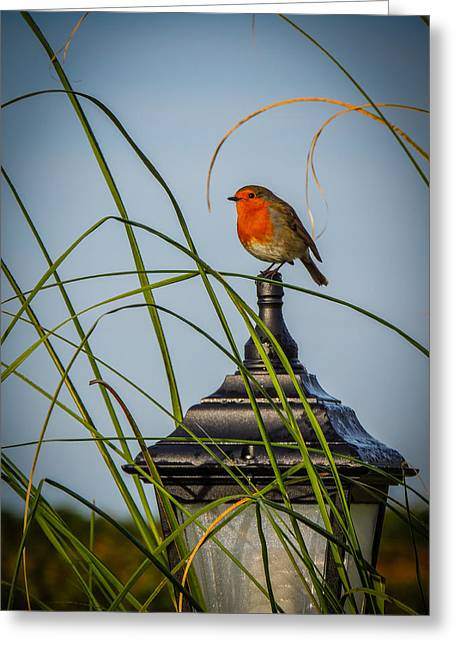 Irish Robin Perched On Garden Lamp Greeting Card