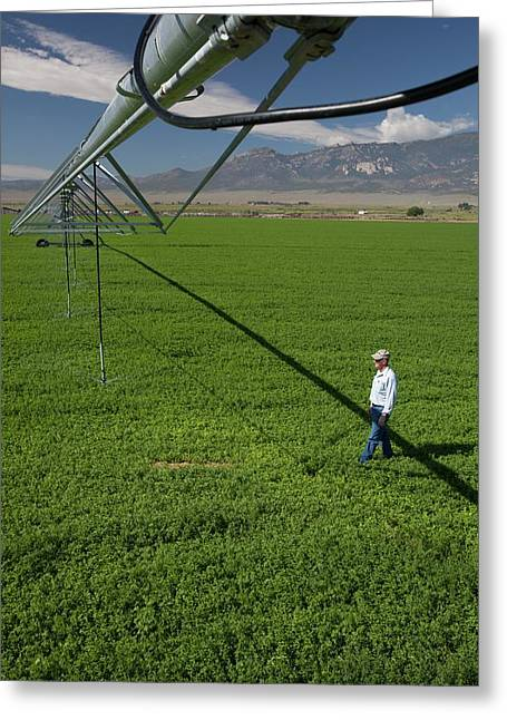 Irrigation Boom And Farmer With Alfalfa Greeting Card by Jim West