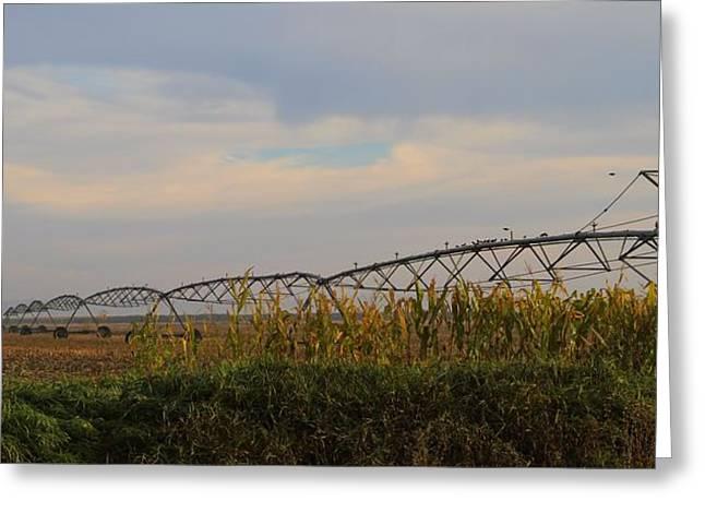 Irrigation On The Farm Greeting Card