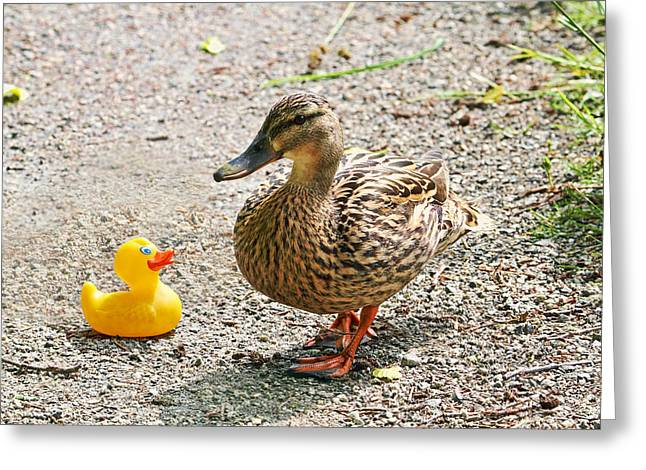 Is Everything Ducky? Greeting Card by Peggy Collins
