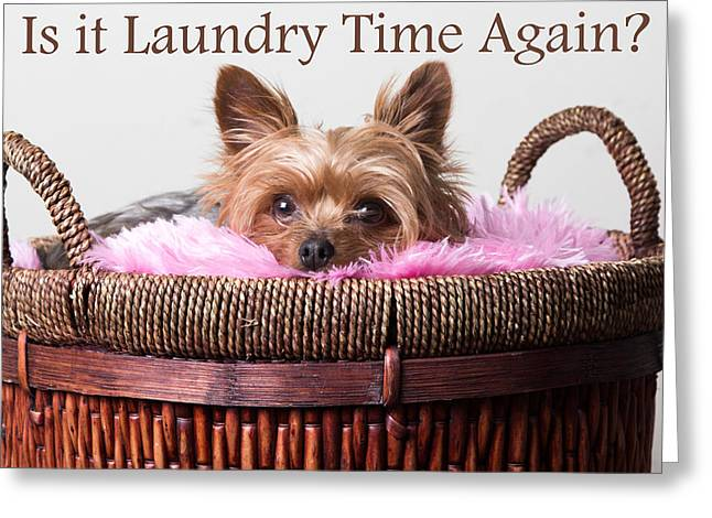 Is It Laundry Time Again? Greeting Card by Purple Moon