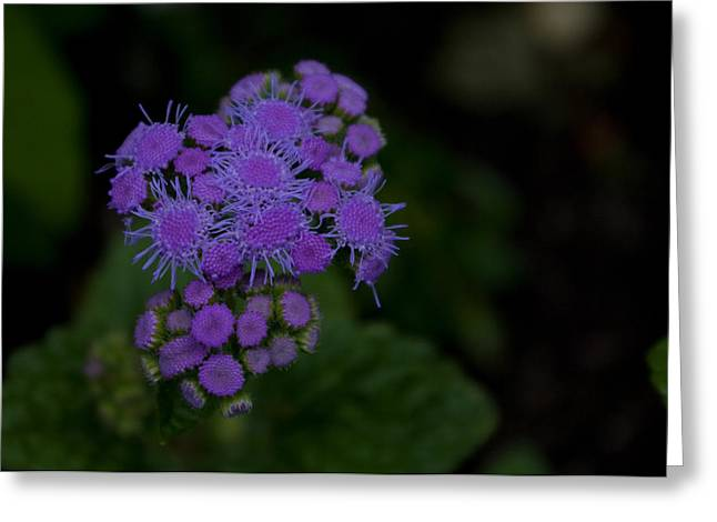 Greeting Card featuring the photograph Is That Purple by Greg Graham