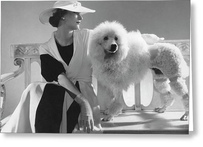 Isabel Johnson With A Poodle Greeting Card by Edward Steichen