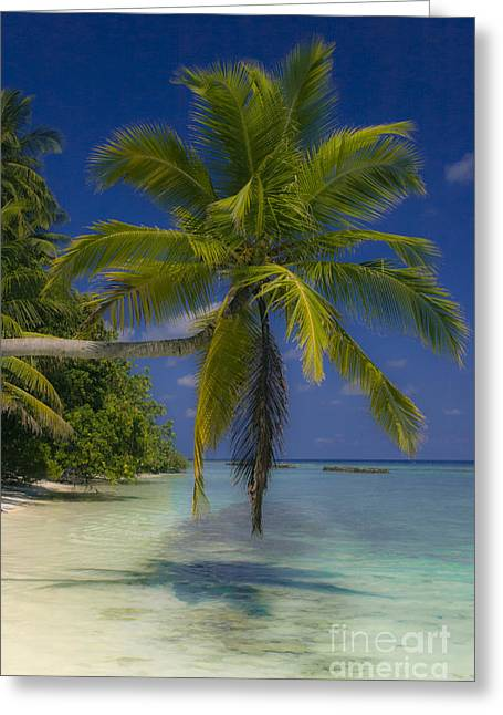 Island Dream Greeting Card