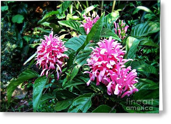 Greeting Card featuring the photograph Island Flower by Leanne Seymour