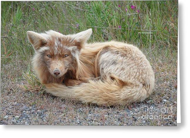 Greeting Card featuring the photograph Island Fox by Gayle Swigart