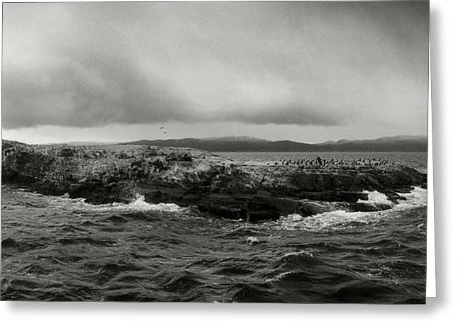 Island Of Arctic Birds And Sea Lions Greeting Card by Panoramic Images