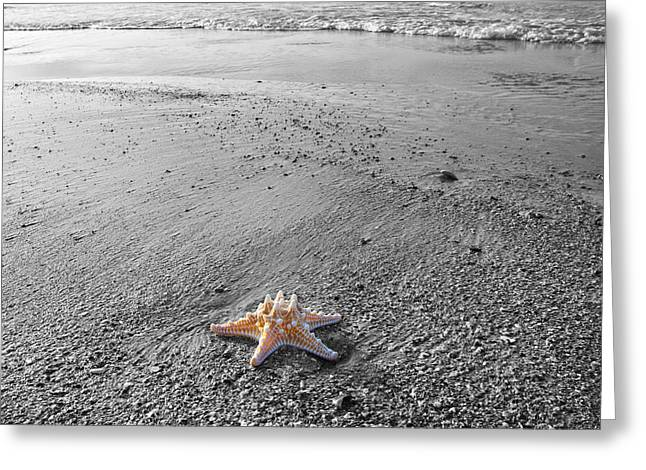 Island Star Greeting Card by Betsy Knapp