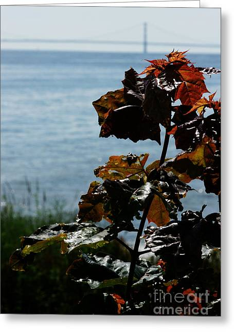 Greeting Card featuring the photograph Island View by Linda Shafer