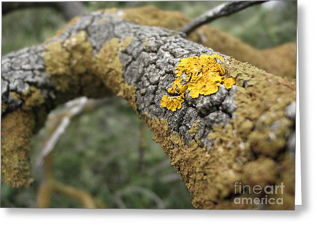 Isolated Lichen Greeting Card